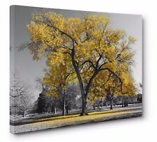 Yellow Leaves Lone Tree Landscape Canvas Print Wall Art Picture 20x30 inches UK