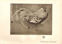 1904 Vittoriano Studio Stampa ~ The Spangled Cock Da Joseph Crawhall