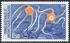 FSAT/TAAF 1987 Starfish/Marine/Sea life/Nature/Conservation 1v (n23007)