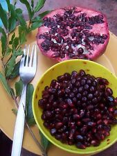 POMEGRANATE. LARGE FRUIT TYPE, 50 + FRESH SEEDS, EASY TO GROW,  FRUITS FAST