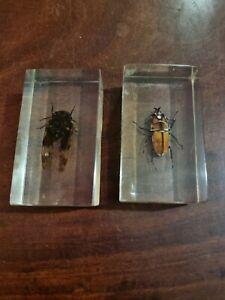 Taxidermy  Resin Encased Bugs X2 used