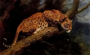 "Dream-art Oil painting Herbert Thomas Dicksee - suspense Leopard on the tree 36"""