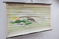 Alte große Lehrtafel Innere Organe Flußbarsch, Wandkarte, Rollkarte,vintage DEKO