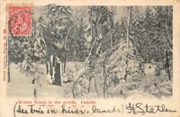 CANADA - winter Scene in the woods