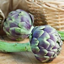 Seeds Artichoke Rimskiy Fioletovyy Roman Purple Organically Grown Vegetable