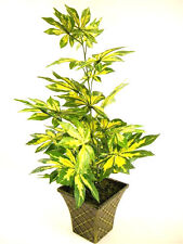 47cm Potted Silk Variegated Artificial Silk Fatsia Japonica Plant ~ house plant