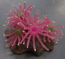 Aquarium Rock w/ Purple Anemones Artificial Decoration 4 x 3 x 3 inches size