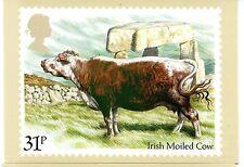 Gran Bretaña Ganado Bovino tarjeta postal del año 1984 (CY-231)