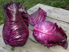 Seeds Red Cabbage Kalibos Organically Grown Russian Heirloom NON GMO