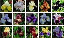 Iris seeds, Mix Flowers, Garden, Flowers,50+seeds, Perennial Plants