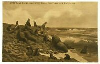Seal Rocks Near Cliff House San Francisco California CA Sepia Vintage Postcard