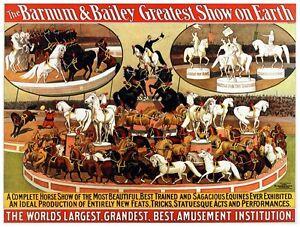 9131.The Barnum and Bailey circus.Sagacious equines.POSTER.decor Home Office art