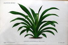 Antique (Pre-1900) Green Original Art Prints