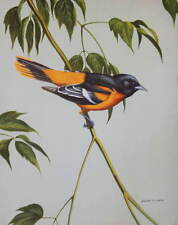 Vintage 40s Print, Baltimore Oriole, by Walter Weber