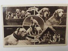 Antique photo postcard Old English Bulldog dog fox terrier Border collie pups