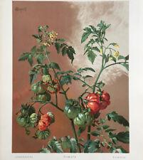 M. Verneuil — Encyclopédie de la plante — Bailly, Védy, Méheut… — 95 pl. — 1908.