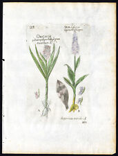 Antique Botanical print-ORCHIS-EARLY MARSH ORCHID-SERAPIAS-Belleval-1796