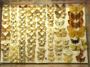 Store Box 2 (92) British Euro Moths Butterflies Insect Lepidoptera Taxidermy