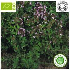 BIO 500 Graines de Thym BIO. Thymus vulgaris. Graines aromatiques. non traité