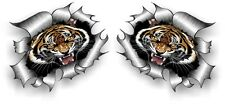 Small Pair STD RIP Ripped Torn Metal with Roaring Bengal Tiger vinyl car sticker