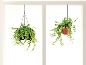 Fenstersticker Fensterfolie Fensteraufkleber Hängetopf Blume Pflanze Blumenampel