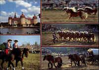 MORITZBURG Sachsen Mehrbild-AK Pferdekutsche, Pferde, Hengst-Parade am Schloss
