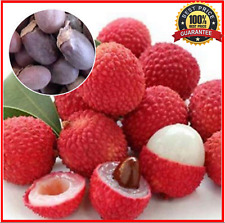10+Fresh_Seeds_Lychee_Tree Outdoor Fruit Tree Seeds for Home Garden !HOT RARE!