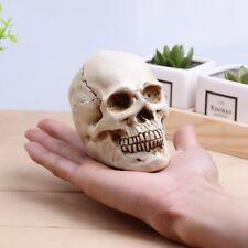 11x7x8.5cm Resin Human Skull Model Anatomical Medical Teaching Skeleton Head
