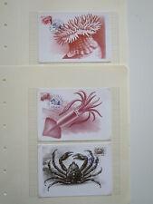 SEA LIFE ICELAND NICE MAXIMUM CARDS /dj302
