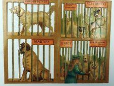 1884 Victorian Die Cut Fox Terrier Pomeranian Spitz Dog Mastiff Gordon Setter
