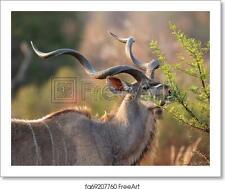 Mature Kudu Bull Art Print / Canvas Print. Poster, Wall Art, Home Decor - C