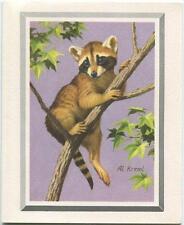 VINTAGE ANIMAL RACCOON CLIMBING TREE LEAVES NATURE PURPLE LANDSCAPE CARD PRINT