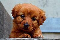 Facebook-Account für Ihren Hund