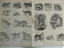 Kunstdrucke mit Gravur Ägypten