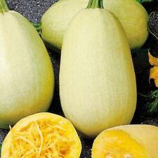 20 seeds of Spaghetti Squash home grown & organic last season harvest