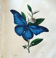 Scarce 1847 Das Buch Der Welt 378pp/36 Hc Plates Insects/Fish/Birds/Mammal s Nice