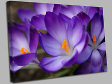Crocus Flower purple Canvas Wall Art Picture Print