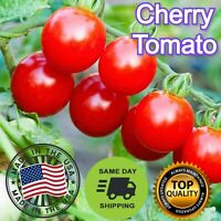 Cherry Tomato Seeds Packs Large NON-GMO Fresh Garden Seeds Sameday USA Ship (25)