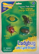 LADYBUG LIFE CYCLE STAGES EDUCATIONAL MODELS TOYS SCIENCE GIFT BOYS GIRLS