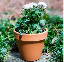 Clay Terra Cotta 6 inch Flower Pot Planter (5 pack) Outdoor Garden Bonsai Pots