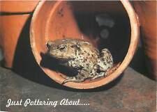 Frog just pottering around postcard