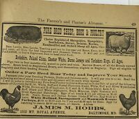 1914 James Hobbs Sheep Hogs Poultry Chickens Baltimore Farm Animals Advertising