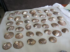 Set of 40 Fifty Year Stock Mother of Pearl Unpolished Freshwater Mussel Shells