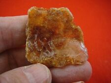 (k-3602) 10 g Rare Kauri tree Gum copal young Amber New Zealand Tane Mahuta