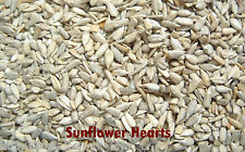 SUNFLOWER HEARTS / KERNELS FOR WILD BIRDS 12.5kg