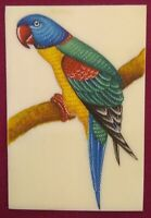 Hand Painted Parrot Fine Birds Miniature Painting India Art Synthetic Ivory