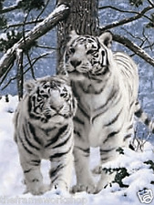 WHITE SNOW TIGERS - 3D MOVING PICTURE 300mm X 400mm (NEW)