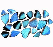 20 PIECES CRAFT GRADE ASSORTED BLUE MORPHO BUTTERFLY WINGS WHOLESALE LOT MIX
