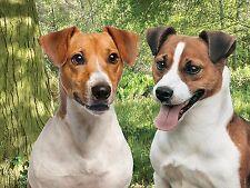 3d Foto Perros Par de Jack Russell Terriers H&S tamaño 39 x 29cm apróx NUEVO