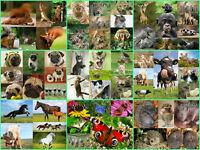 Confezione da 100 cartoline animali, tutte diverse immagini
